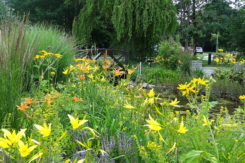 feature-thw-greunanlage-park-lilie-taglilie-gelb-teich-bruecke